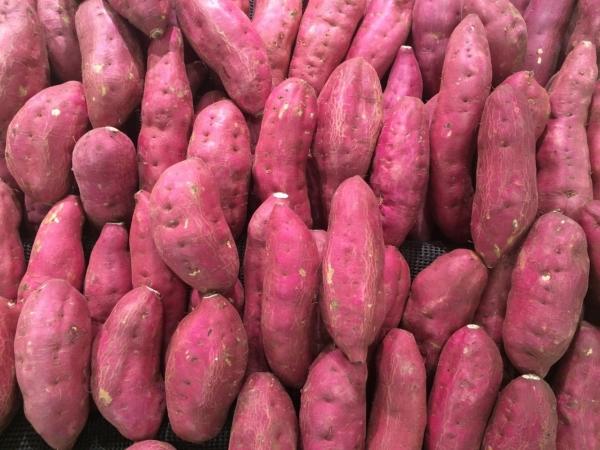 Kartoffeln Luna Rossa BIO